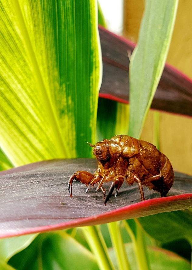 Creepy crawler, Ubud, Bali