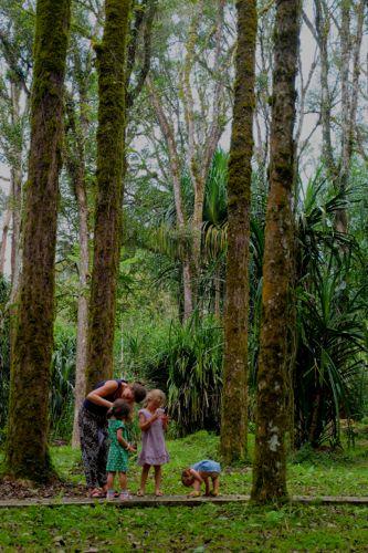 Bedugul, Bali, Botanical garden