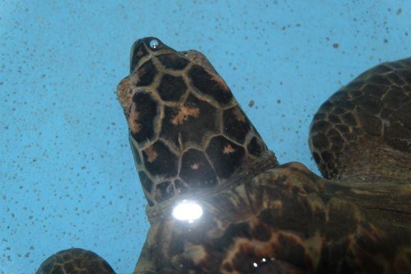 Turtle project, Pemuteran, Bali