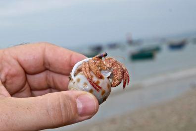 Little lobster friend, Mui Ne
