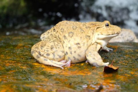 Holy toad!