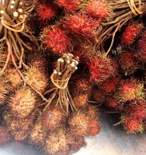Rambutan, the hairy fruit