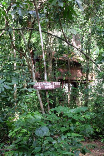 Halfmoon tree house