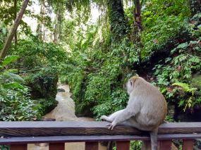 monkey - 14