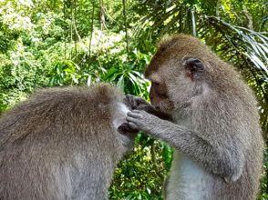 monkey - 17