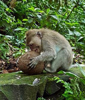 monkey - 18