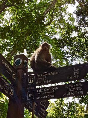 monkey - 19