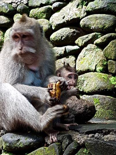 monkey - 23