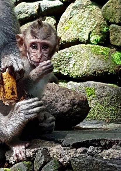 monkey - 24