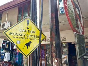 monkey - 25